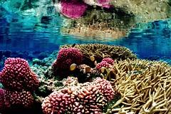 Coral Reef at Palmyra Atoll National Wildlife ...