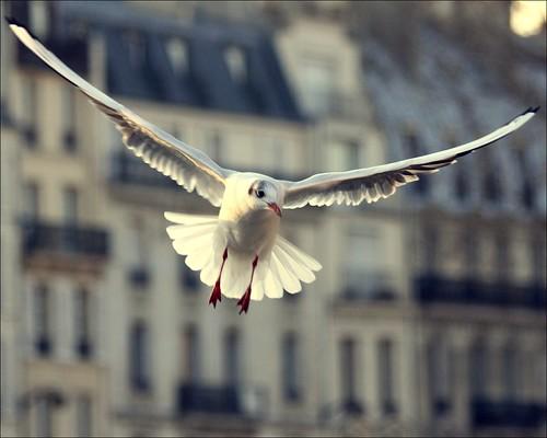 Jonathan Again ~ Paris ~ MjYj by MjYj