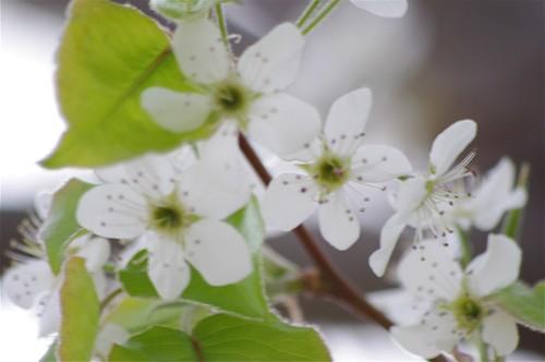 03.07.2011 Spring blooms