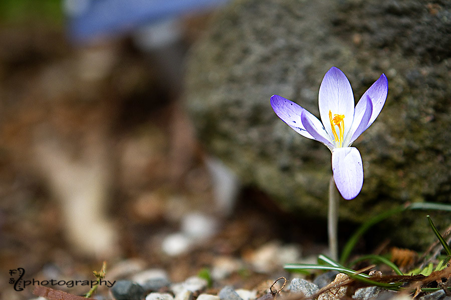 Stand alone crocus