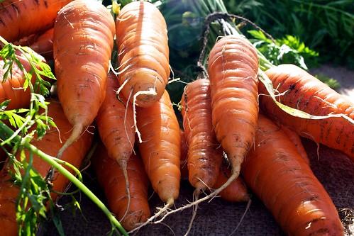 Carrots. Real Carrots