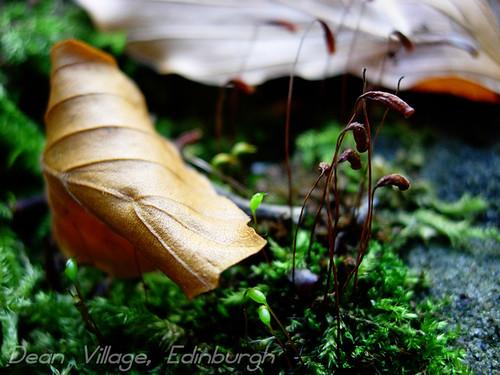 Leaf-moss-edinburgh