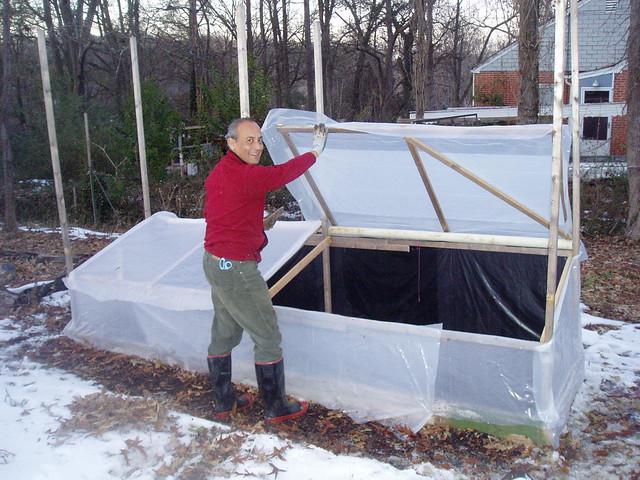 francisco and cold frame open lotus garden
