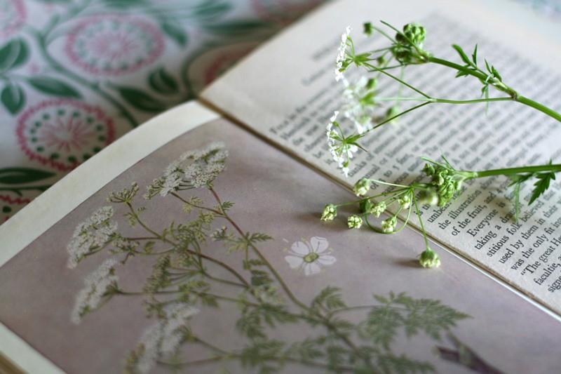 british flora illustrations