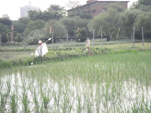 台大校園__稻草人 (68)