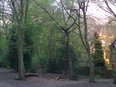 Glimpses of Sunset, Highgate Wood