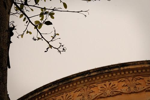 Branches-Mosta-Dome