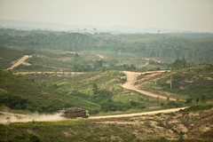 Turning the Page on Rainforest Destruction: Ch...