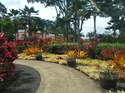 Dole Pineapple Plantation by cubechick