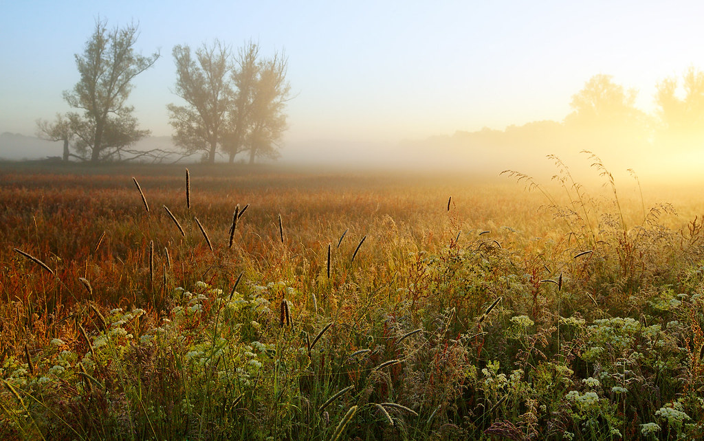 Elysian Meadow