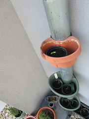 Paprika auf 4 Ebenen, wobei nur auf 3 welche zu sehen sind.