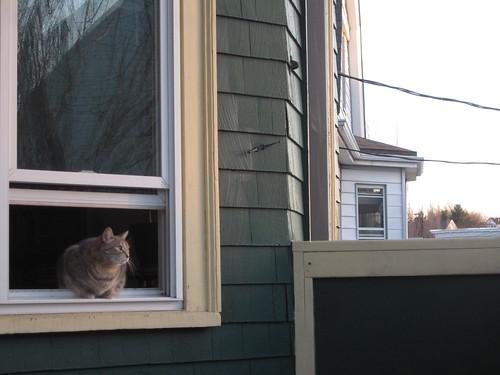 Edith at the windowsill