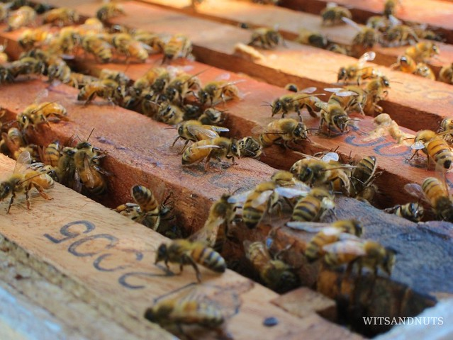 bees of bohol bee farm