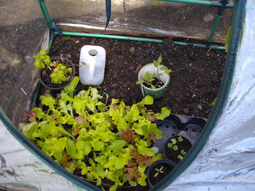 April.11 baby salad leaves