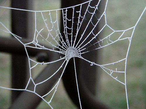 SpiderWebFrost