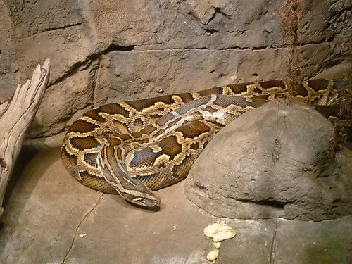 WI, Madison Zoo 8 - Snake