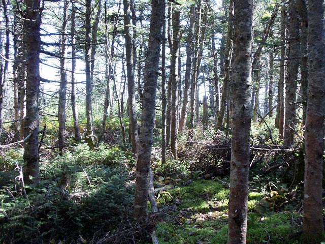 ridgetrailforest