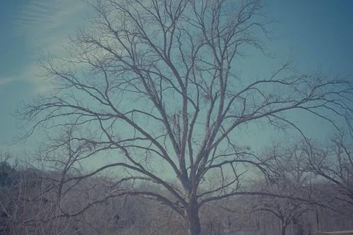 naked tree