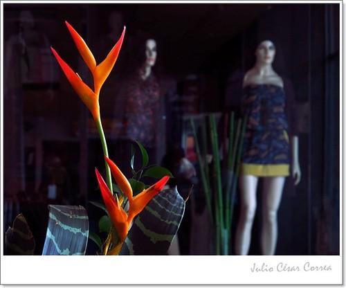 Modelos en flor by Julio César Correa