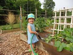 Ella watering