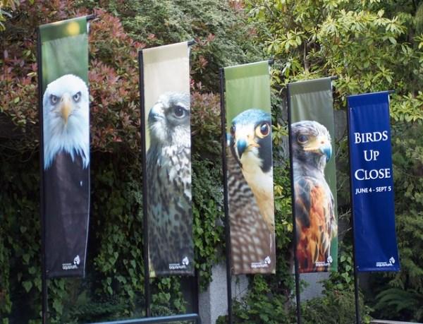 Birds Up Close @ the Vancouver Aquarium