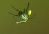 Green Spider - James Allan