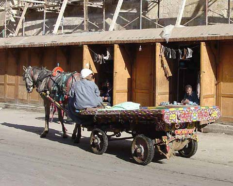 Old Cairo Horse Cart : Cairo Youth