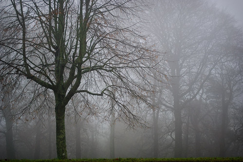 363/365 Misty