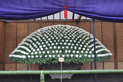 A traditional Ozukuri bed of Kiku