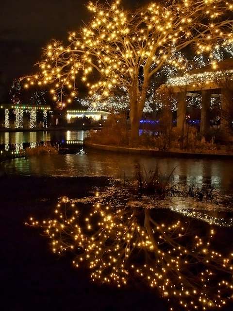The night's reflected brilliance