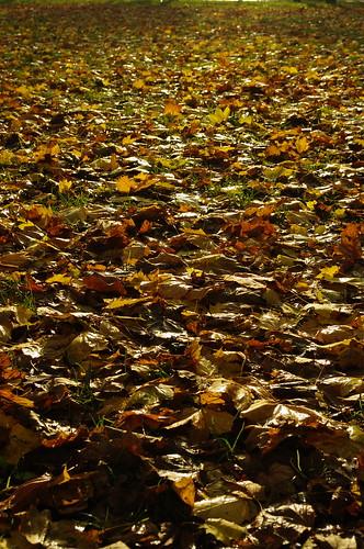 Autumn in Brugge
