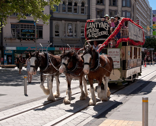 Clydesdales pulling the oldfashioned tram