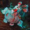 Warty Frogfish -  Antennarius maculatus by divemecressi
