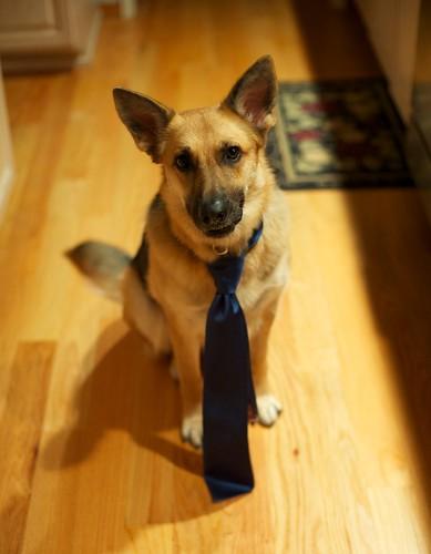 Minnie models the tie