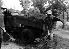 WPA workers shoveling plant material