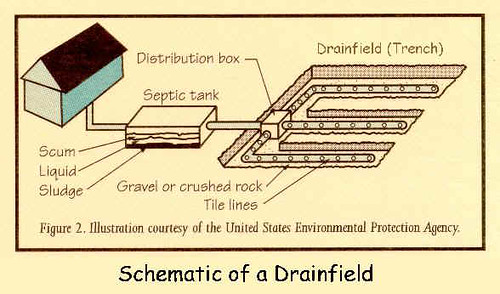 Septic system drainfield