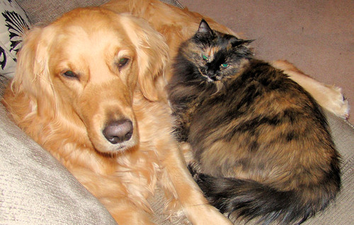 best buddies - Grace and Cadbury by William J. Gibson, the Canuckshutterer