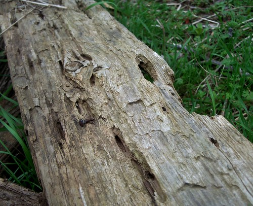 awesome weathered wood