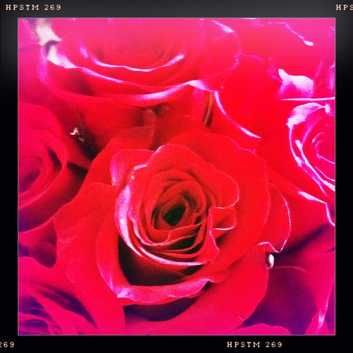 Valentine's Roses #4