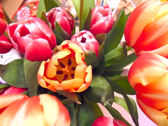 H's Birthday tulips