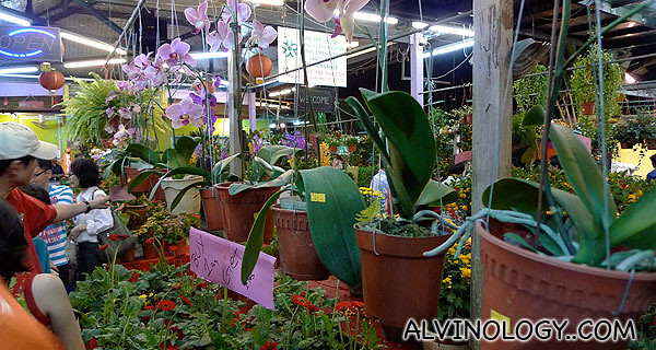 Nowadays, people buy orchids for Chinese New Year too