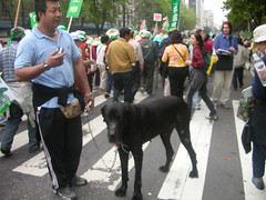 Dogs Say Yes to Taiwan 3