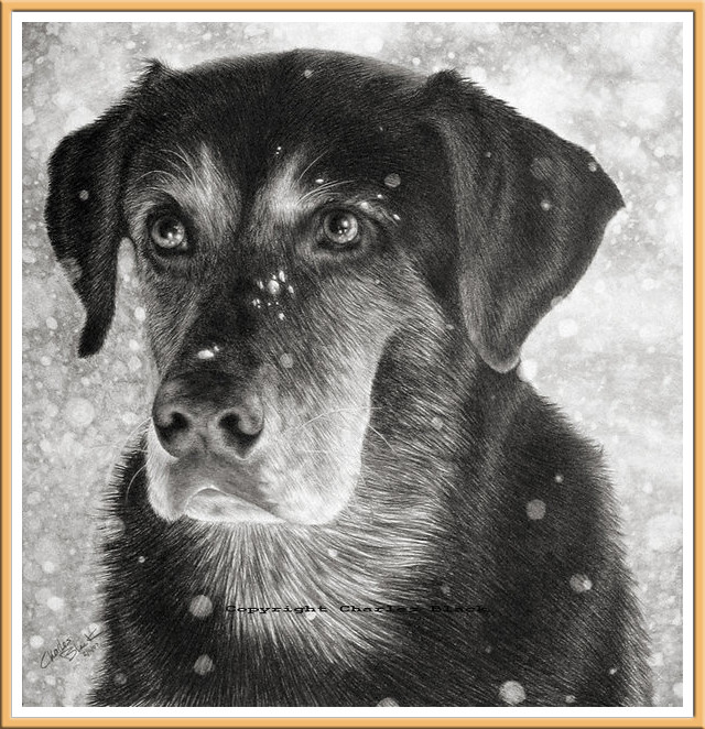 Custom Pet Portraits by Charles Black
