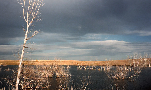 a lake in north dakota with dead trees sticking out