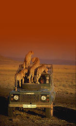 kenyasafari gamereserves kenyasafaris ugandasafari tanzaniasafaris eastafricasafaris gorillasafaris tanzaniatours ugandatours kenyatour tourafricasafaris kenyanationalparkssafaritouroperator africanationalgameparks gamesanctuariessafaritouroperator kenyasafarisguide