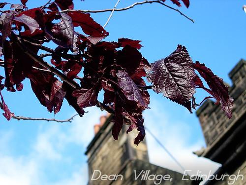 Red-leaves-dean-village