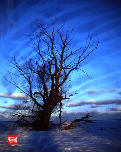 KodakPN1 CHI Velvia50 CrazyTree 02B