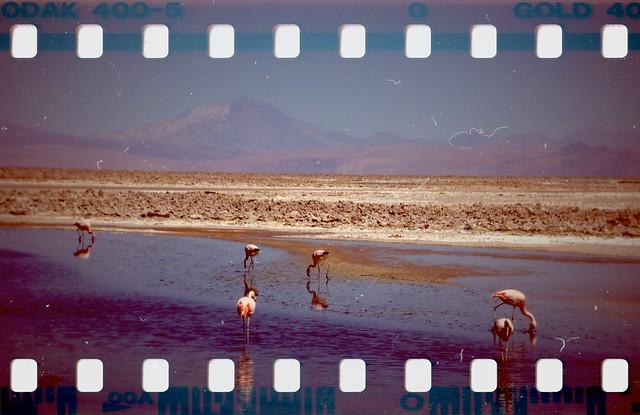 Salar de Atacama - Laguna Chaxa