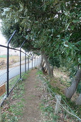 鴨居原市民の森(鎌倉古道、Kamoihara Community Woods)