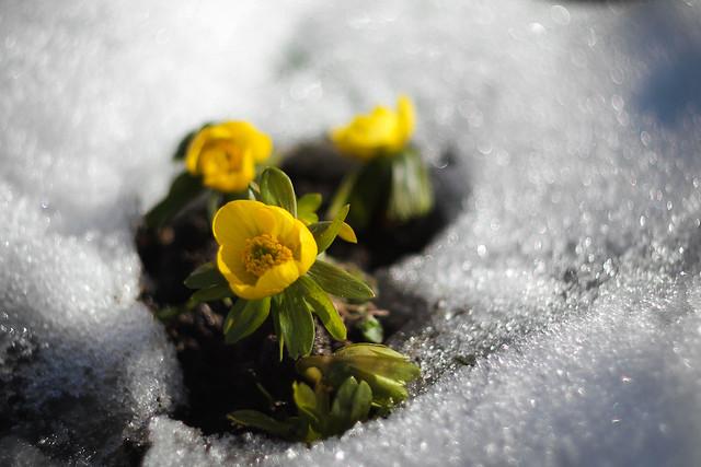 Tipic de primăvară